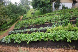 Razbijmo vrtnarske mite